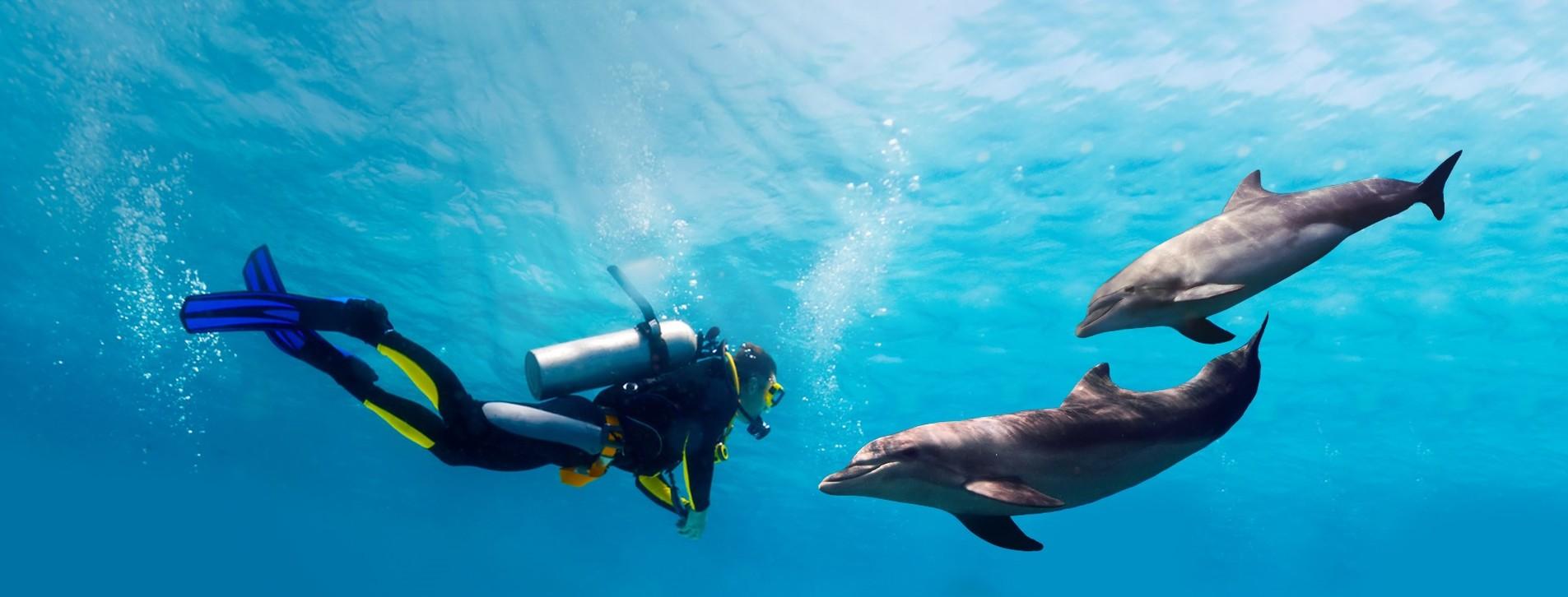 Фото 1 - Дайвинг с дельфинами