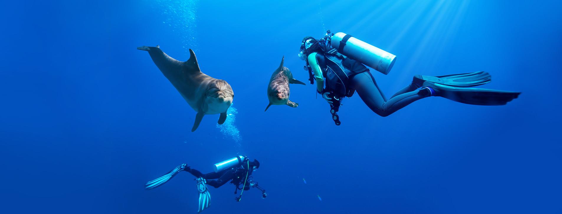 Фото 1 - Дайвинг с дельфинами для двоих
