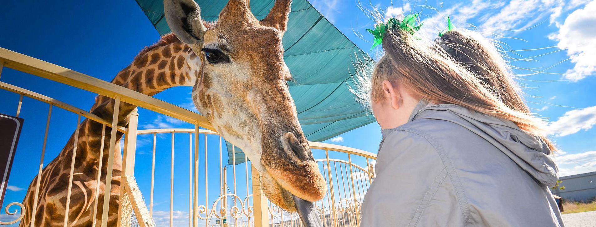 Фото 1 - Зоопарк «12 месяцев» для двоих