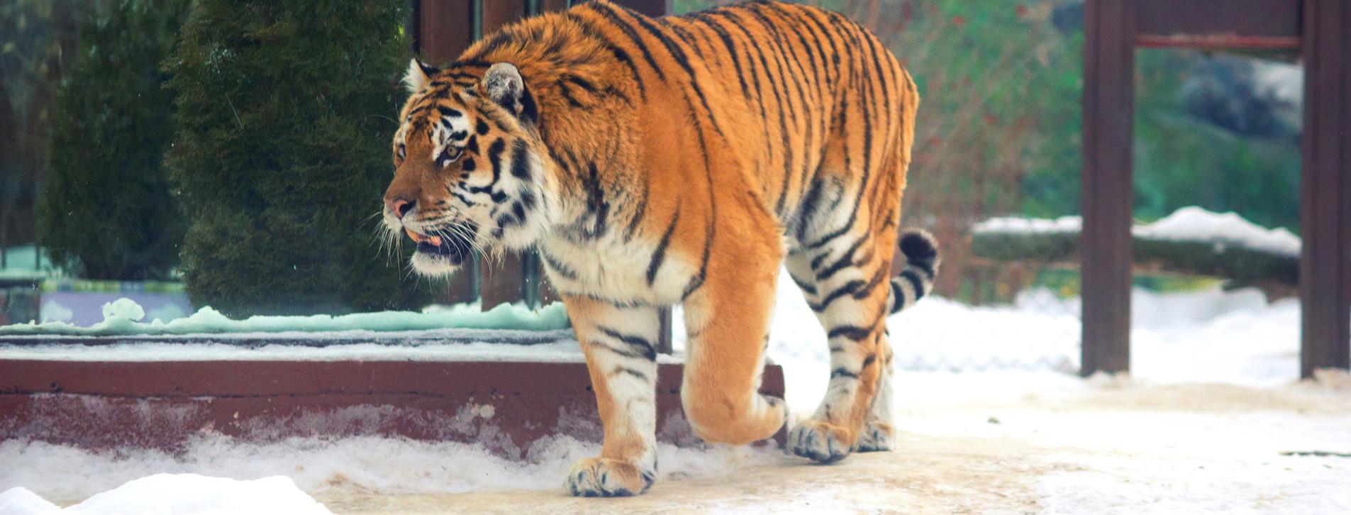 Фото - Зоопарк «12 місяців» для двох
