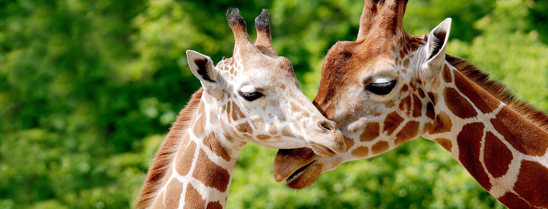 Фото - Зоопарк «12 месяцев» для компании