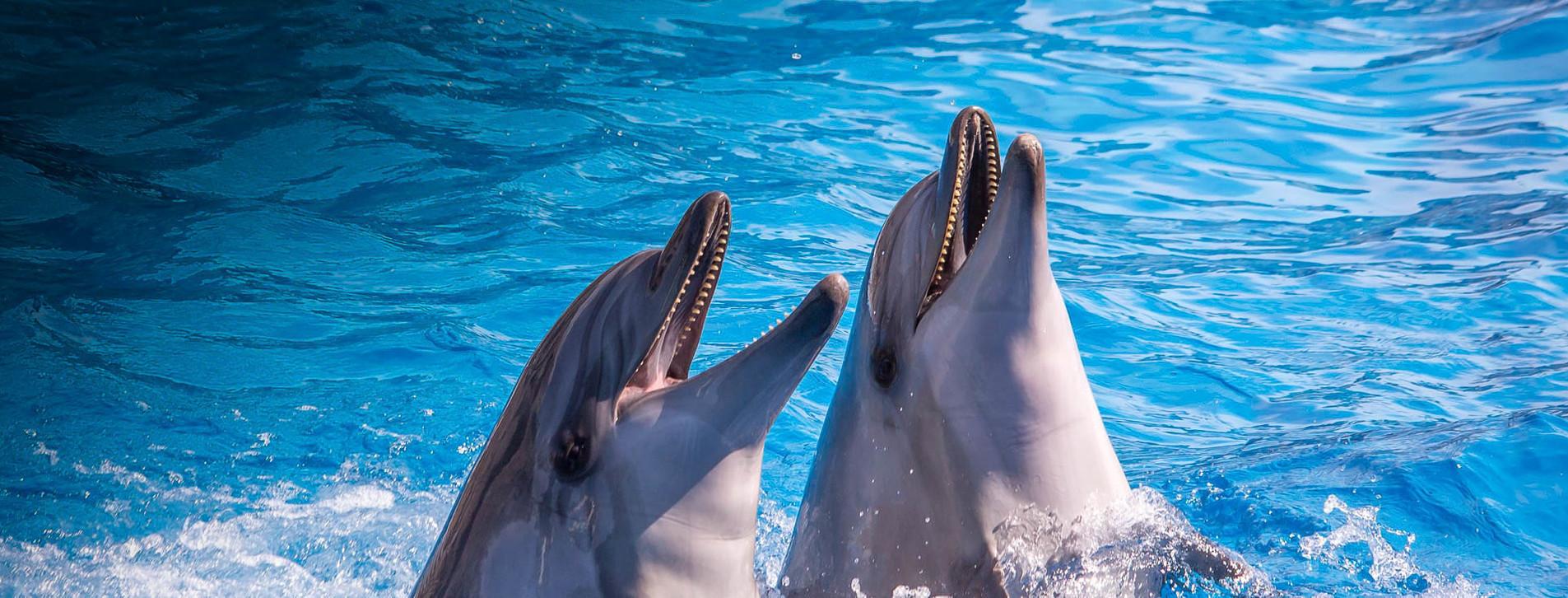 Фото 1 - Дельфинарий НЕМО