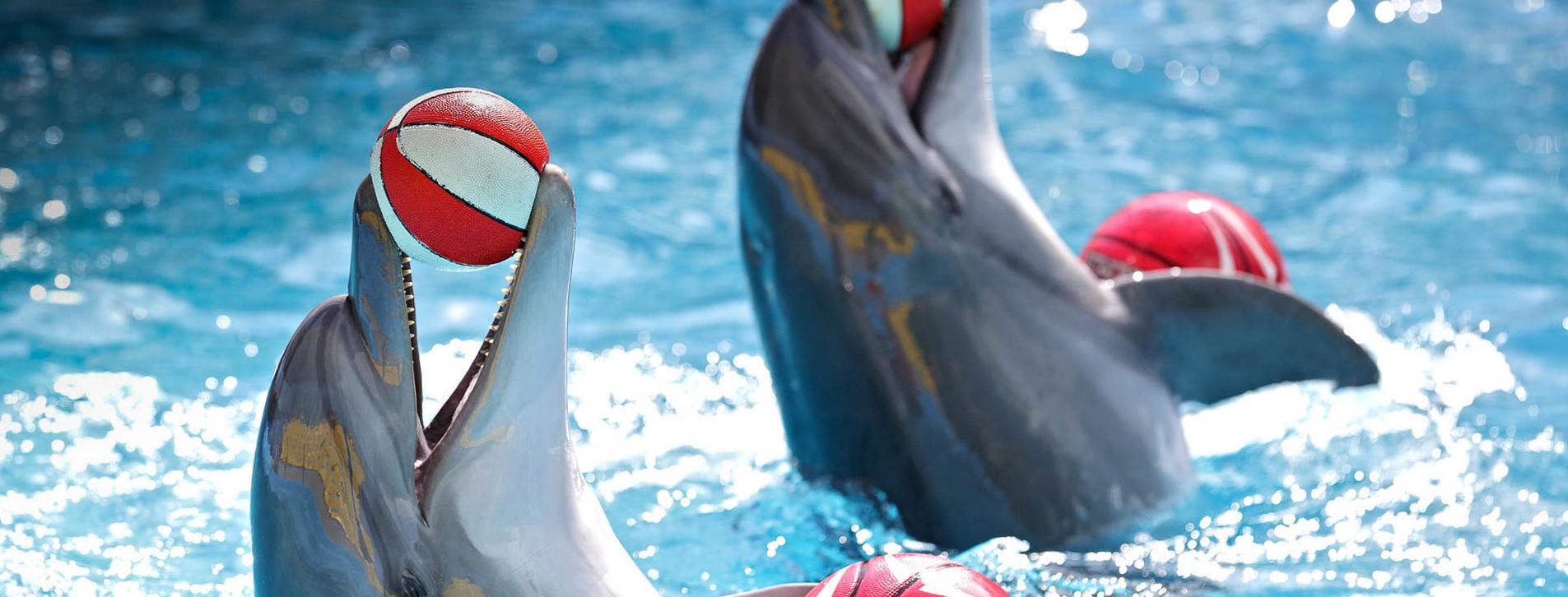 Фото 1 - Дельфинарий НЕМО для двоих