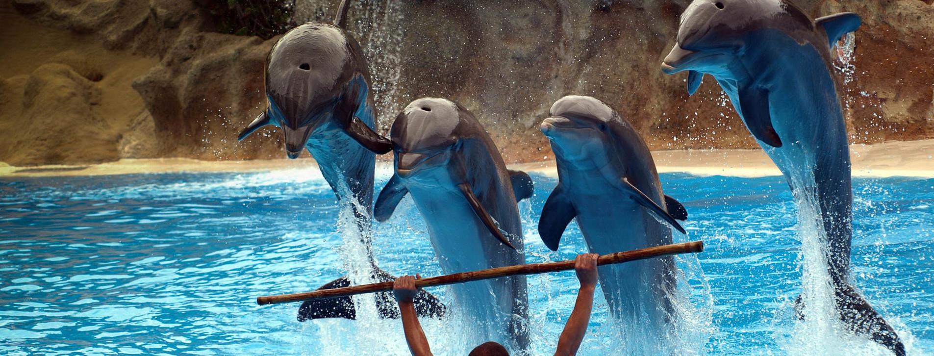 Фото 1 - Дельфинарий НЕМО для компании