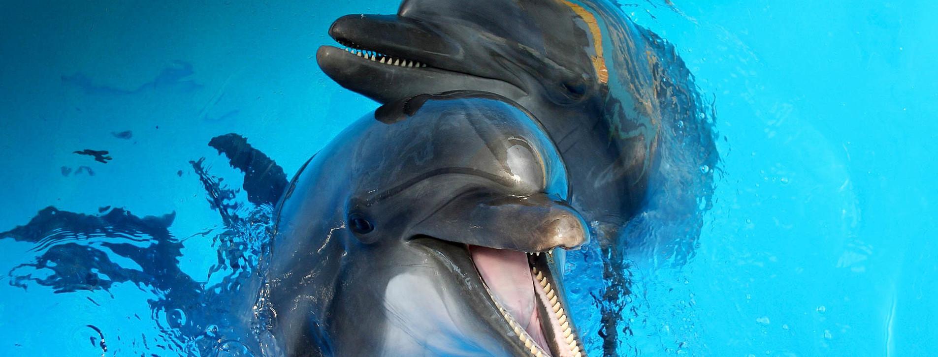 Фото 1 - Романтическое шоу в дельфинарии