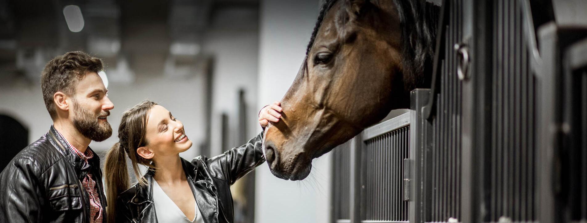 Фото 1 - Экскурсия на конюшню для двоих