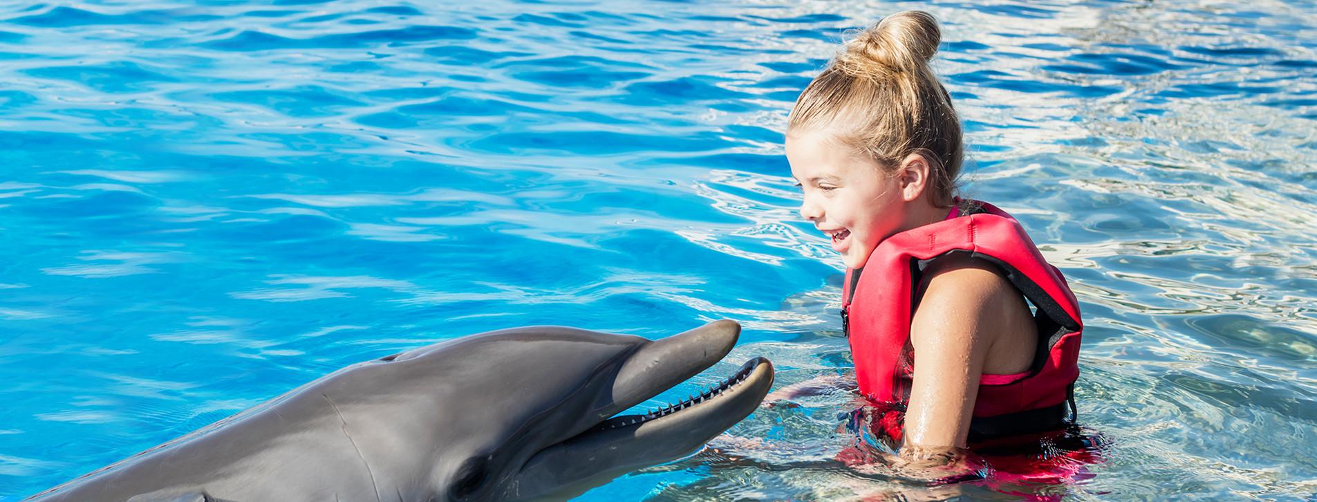 Фото 1 - Знайомство з дельфінами