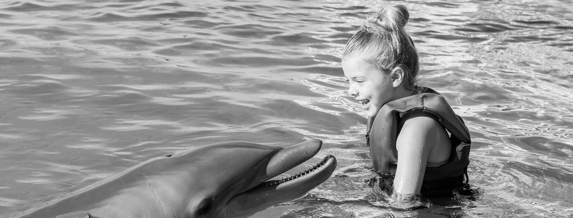 Фото 1 - Знакомство с дельфинами