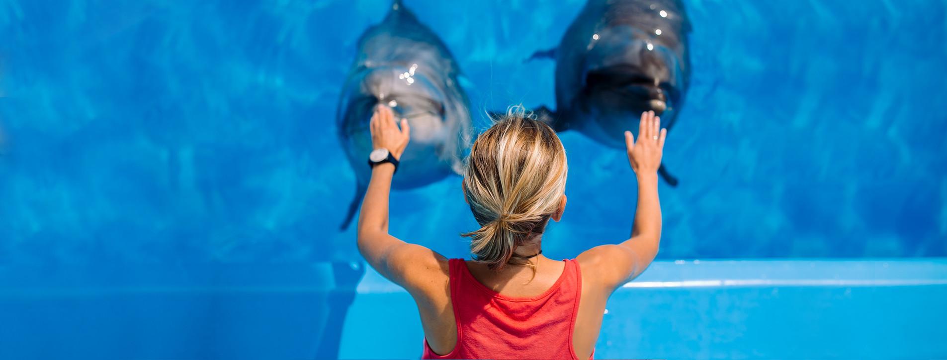 Фото 1 - Знакомство с дельфинами для двоих