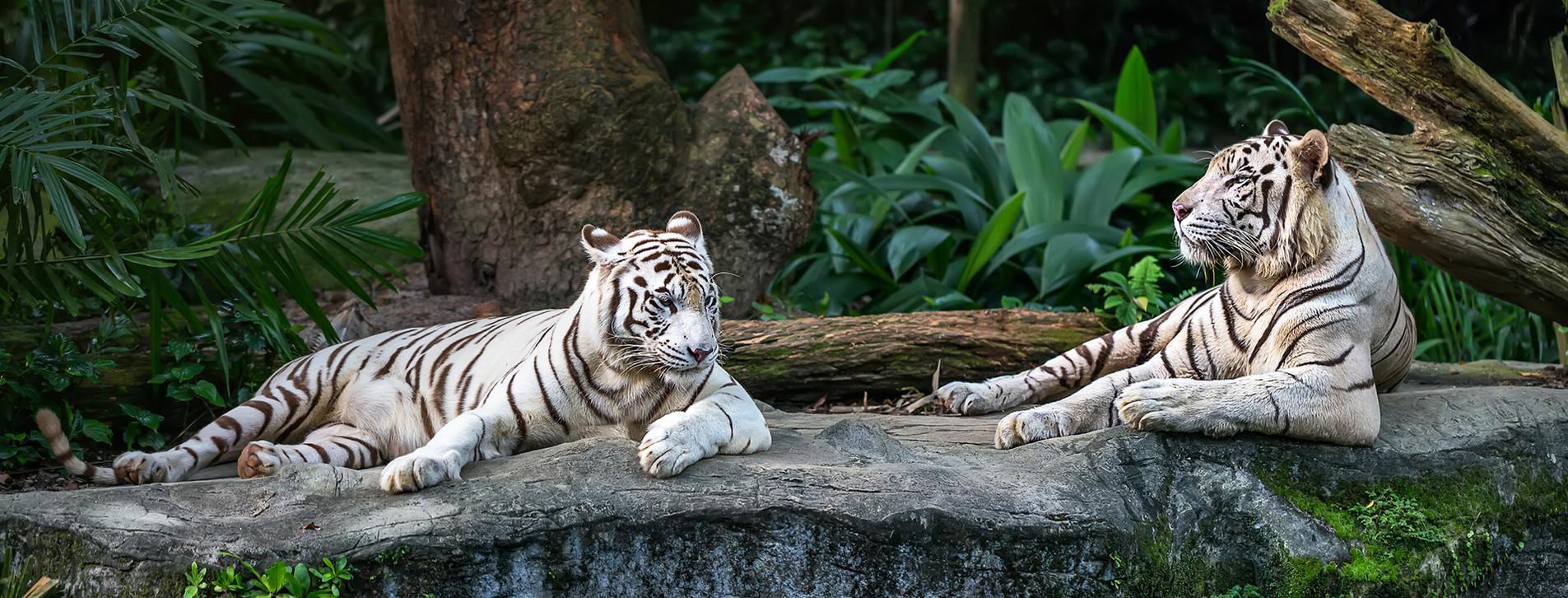 Фото 1 - Зоопарк «Лимпопо» для компании