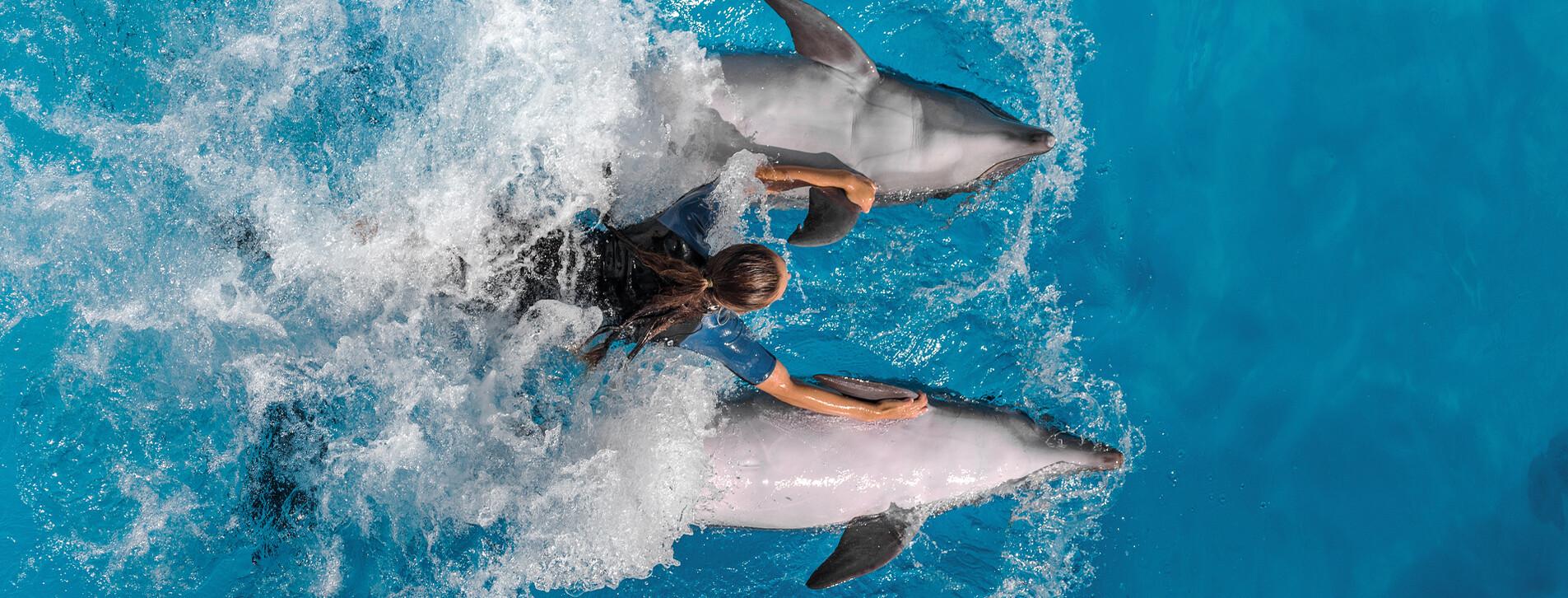 Фото 1 - Плавання з дельфінами