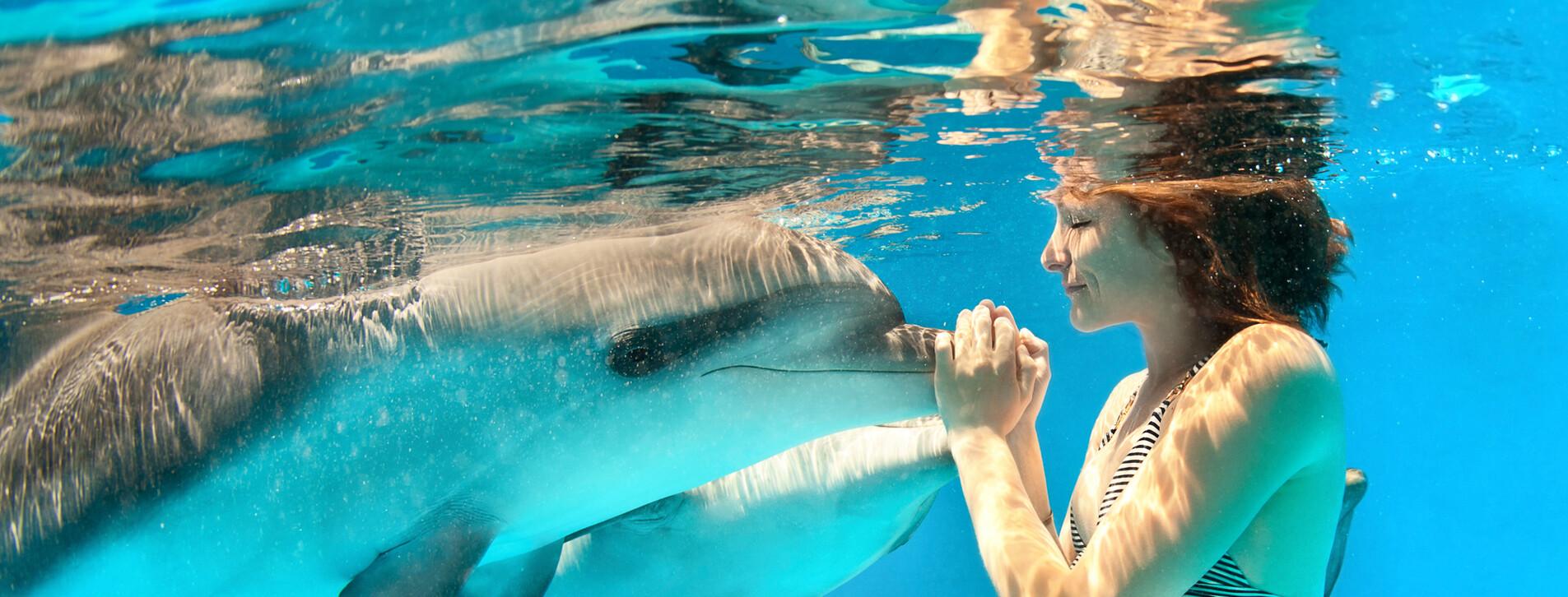 Фото 1 - Плавание с дельфинами для компании