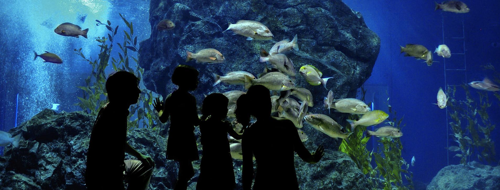 Фото 1 - Океанариум для семьи