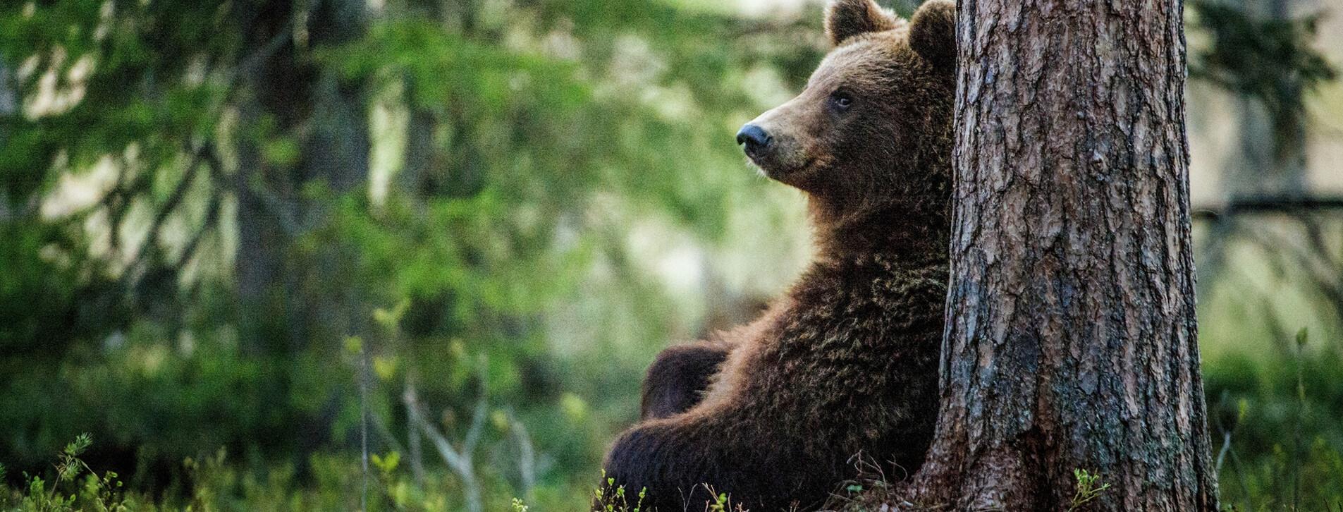 Фото 1 - Индивидуальная экскурсия в медвежий приют для двоих