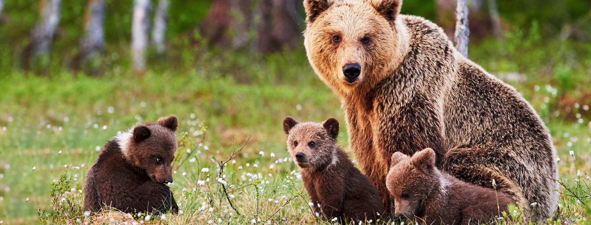 Фото 1 - Индивидуальная семейная экскурсия в медвежий приют