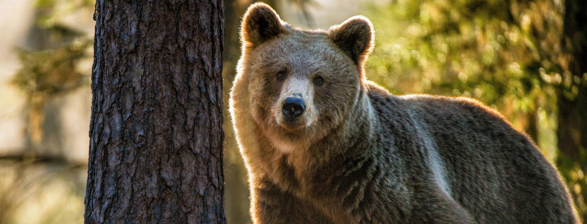 Фото 1 - Индивидуальная экскурсия в медвежий приют