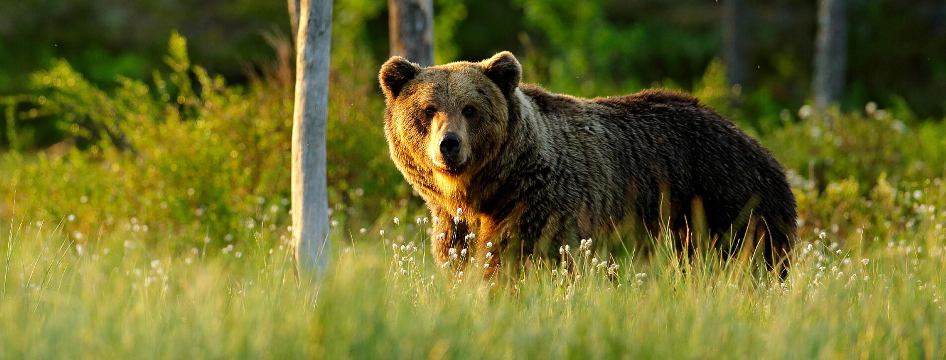 Фото 1 - Экскурсия в медвежий приют с завтраком