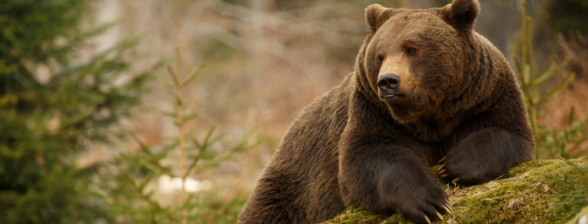 Фото 1 - Экскурсия в медвежий приют с завтраком для двоих