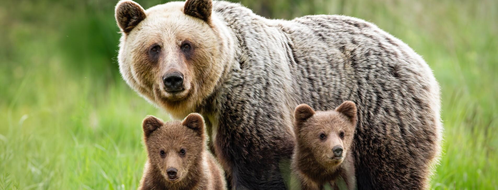 Фото 1 - Семейная экскурсия в медвежий приют с завтраком
